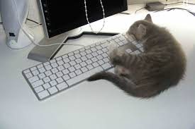 au bureau 8 forums macbidouille galerie voir l image dormir au bureau