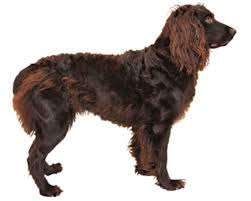 Springer Spaniel Shed Hunting best hunting dogs ol picks the best retrievers pointers
