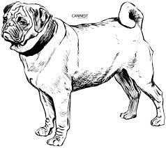 Pet Dog Coloring Pages Free Printable Mail 17845