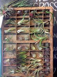 Ikea Brusali Wardrobe Instructions by Home Design Air Plant Care Instructions Concrete Interior