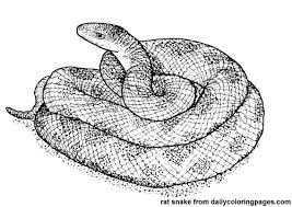 Texas Rat Snake Animal Coloring Pages