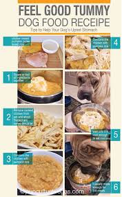 Too Much Pumpkin For Dogs Diarrhea by Best 25 Dog Upset Stomach Remedies Ideas On Pinterest Dog Upset