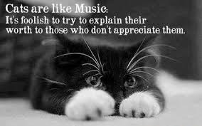 cat quotes cat quotes cat sayings cat picture quotes
