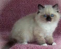 38 best Kittens images on Pinterest