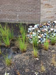 Ocean Township High School Rain Garden is looking good