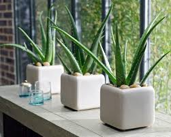 Plants In Bathroom Good For Feng Shui by 10 Easy To Grow Indoor Plants In India Interior Design Ideas