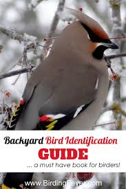 National Geographic Backyard Bird Identification Guide • Birding Fever The Joy Of Bird Feeding Essential Guide To Attracting And Birders Break Records For Great Backyard Count Michigan Radio New Guides Backyard Birding Add Birders Joyment Aerial Birds Socks Absolute Birding Co East Petersburg Shopping Authentic Common Redpoll Photosgreat South 100 Watcher Attract To Your Best 25 Watching Ideas On Pinterest Pretty Birds In Burlington Vermont Photos In Winter Get Ready For Photo 20 Best Birdfeeders Images Feeding Station