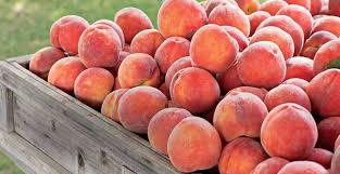 Dills Pumpkin Patch Columbus Ohio by South Of Lane Restaurant Upper Arlington Ohio 135 Reviews