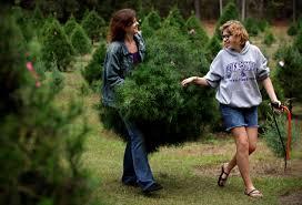 Christmas Tree Farm Eustis Fl by Fresh Off The Tree Farm News Gainesville Sun Gainesville Fl
