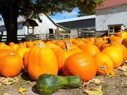 Free Pumpkin Patch Cincinnati by Things To Do In Cincinnati U2013 The Gabbard Team U2013 Cincinnati Real Estate