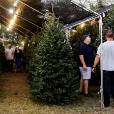 Customers Looked For Christmas Trees At Gallaghers Pumpkins In St Petersburg