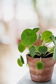 entretien plante grasse d interieur plante succulente d interieur plantes vertes intrieur facile