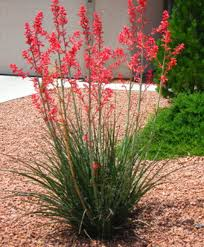 13 Easy DIY Arizona Backyard Projects Ideas - Decomagz Backyard Diy Projects Pics On Stunning Small Ideas How To Make A Space Look Bigger Best 25 Backyard Projects Ideas On Pinterest Do It Yourself Craftionary Pictures Marvelous Easy Cheap Garden Garden 10 Super Unique And To Build A Better Outdoor Midcityeast Summer Frugal Fun And For The Gracious 17 Diy Project Home Creative