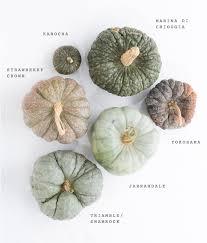 Varieties Of Pumpkins by Heirloom Pumpkin Varieties For Fall 100 Layer Cake