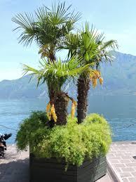fleur et plante du lac images gratuites arbre montagne fleur lac botanique flore
