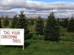 Christmas Tree Seedlings by Christmas Trees U0026 Wreaths U2013 Goughan Farms