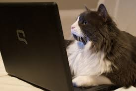 cat on file cat on laptop just browsing jpg wikimedia commons