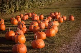 South San Jose Pumpkin Patch by The 10 Best Pumpkin Picking Patches Around Denver Care Com Community