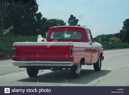 100 Cowboy Truck Drives Red Pickup Truck With Dog In Back Down Route 101