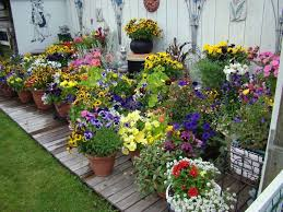 Concept Container Gardening Ideas DMA Homes
