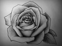 Best 25 Rose Drawings Ideas On Pinterest