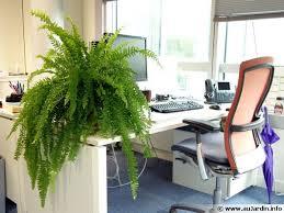 le bureau verte plante pour le bureau florideeo
