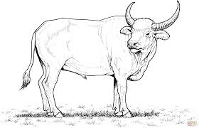 Wild Water Buffalo Coloring Page