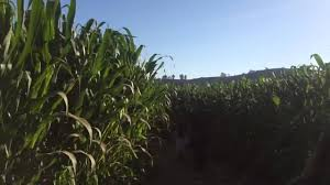 Moorpark Pumpkin Patch Underwood Family Farms by Tanaka Farms Pumpkin Patch And Corn Maze Youtube