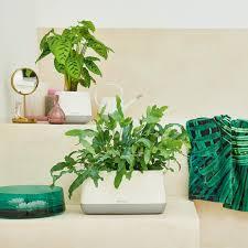 wohin mit der pflanze die idealen zimmerpflanzen für jeden
