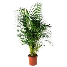 zimmerpflanzen gartenpflanzen kaufen ikea österreich