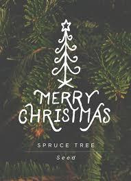 Christmas Tree Spruce Seed Favor