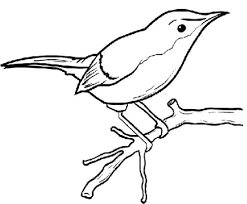 Pin Drawn Bird Tree Drawing 11