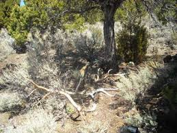 pro s tips shed hunting sportsman s news