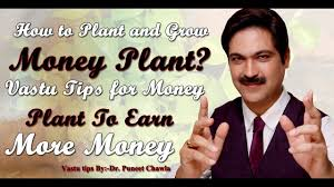 Plants In Bathroom Vastu by Money Plant How To Plant And Grow Money Plant Vastu Tips For
