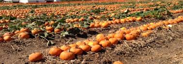 Mission Valley Pumpkin Patch by Five Best Pumpkin Patches In Orange County Oc Mom Blog