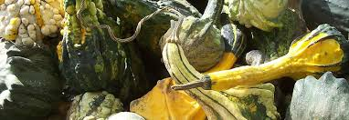 Best Pumpkin Patches Near Milwaukee by Jim U0027s Pumpkin Farm