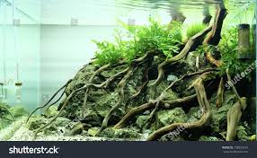 Aquascape Wood Rock Stock Photo 738632542 - Shutterstock Aquascaping Fish Tank Projects Aquadesign George Farmers Live Aquascaping Event At Crowders Ipirations Mzanita Driftwood For Inspiring Futuristic Home Planted Riddim By Alejandro Menes Aquarium Design Contest Ada Horn Wood Beautiful Natural Hardscape For Superwens 2012 Aquascape Petrified Youtube Fish Aquariums The Worlds Best Planted Aquarium Products Designs Reviews Out Of Ideas How To Draw Inspiration From Others Aquascapes 7 Wood Images On Pinterest Sculpture Lab Tutorial Nano Cube Size 20 X 25h