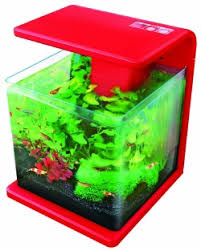 nano fish in a nano aquarium the fish doctor