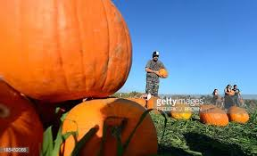 Pumpkin Patch Cal Poly Pomona by Cal Poly Pomona Pumpkin Festival Stock Photos And Pictures Getty