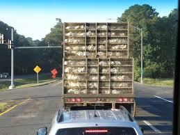 Eastern Shore Residents Call For More Oversight Of Chicken Manure ... Used Trucks For Sale In Delaware 800 655 3764 N700816a Youtube Moving Truck Rentals Budget Rental Delaware Subaru Vehicles For Sale In Wilmington De 19806 Welcome To Ud Trucks Snow Plows Readied Winter Whyy Seaford Chevrolet Dealer Selling Used Trucks Ap154 Shop New And Preowned Cars Suvs Elsmere Monster Meltdown Dump Repokar Home Bayshore Mack Granite Gu713 In For Sale Used
