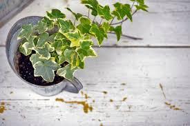 pflanzen fürs schlafzimmer die fördern gesunden schlaf