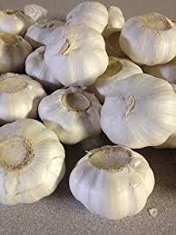 gourmet chesnok garlic bulbs neck 4 bulbs
