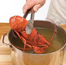 cuisiner homard congelé comment cuire le homard trucs et conseils cuisine et nutrition