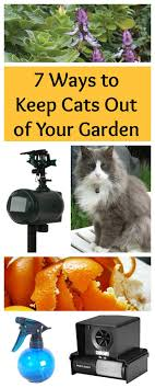 7 Ways to Keep Cats out of Your Garden