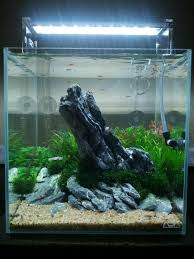 Seiryu Stone Aquascape | Aquascaping/Aquarium | Pinterest ... Aquascaping Fish Tank Projects Aquadesign George Farmers Live Aquascaping Event At Crowders Ipirations Mzanita Driftwood For Inspiring Futuristic Home Planted Riddim By Alejandro Menes Aquarium Design Contest Ada Horn Wood Beautiful Natural Hardscape For Superwens 2012 Aquascape Petrified Youtube Fish Aquariums The Worlds Best Planted Aquarium Products Designs Reviews Out Of Ideas How To Draw Inspiration From Others Aquascapes 7 Wood Images On Pinterest Sculpture Lab Tutorial Nano Cube Size 20 X 25h
