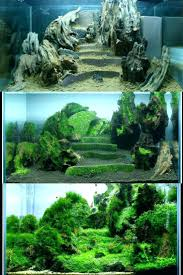 Most Beautiful Aquascapes – Homedesignpicture.win An Inrmediate Guide To Aquascaping Aquaec Tropical Fish Most Beautiful Aquascapes Undwater Landscapes Youtube 30 Most Amazing Aquascapes And Planted Fish Tank Ever 1 The Beautiful Luxury Aquaria Creating With Earth Water Photo Planted Axolotl Aquascape Tank Caudataorg 20 Of Places On Planet This Is Why You Can Forum Favourites By Very Nice Triangular Appartment Nano Cube Aquascape Nature Aquarium Aquascaping Enrico A Collection Of Kristelvdakker Pearltrees