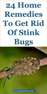 25+ Unique Stink Bug Smell Ideas On Pinterest | Stink Bug ... How To Keep Mosquitoes Away Geting Rid Of Five Tips For Getting Bugs And Pests On Your Patio Youtube To Get Chiggers Skin Body Yard Symptoms Fast Crawly Catures In My Backyard Alberta Home Gardening 25 Unique Rid Spiders Ideas Pinterest Kill Off Bug Control I Repellent Spiders Spider Spray Sprays Cutter 16 Oz Outdoor Foggerhg957044 The Of Time Tested Bob Vila Pictures With Japanese Beetles Garden Best Indoor Mosquito Killers Insect Cop