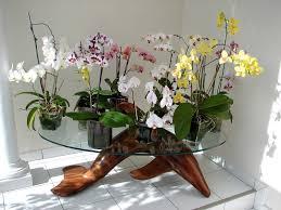 culture phalaenopsis et autres orchidées en pot de verre