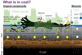 Coal Beds Originate In by Coal Kentucky Geological Survey University Of Kentucky