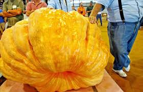 Heaviest Pumpkin Ever by 10 Of The World U0027s Largest Vegetables And Fruits Oddee
